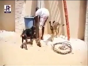 Funny Video: Nepa Workers in Big Gobe!